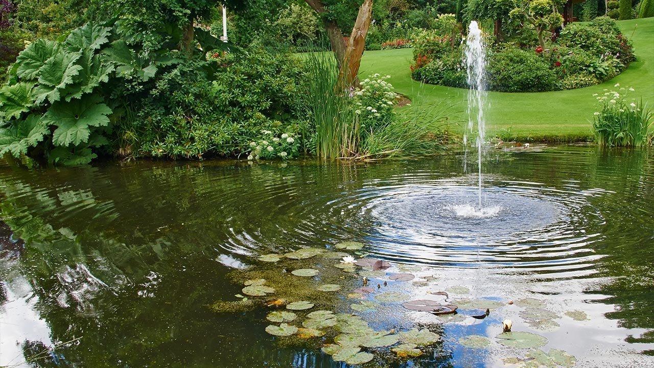 Fournitures de bassins pour professionnels